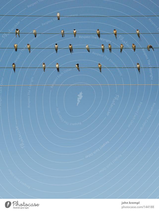 vögeln Himmel blau Sommer Linie Vogel Geometrie Draht Musiker Musiknoten singen Griechenland Lied Nest Schwalben Pfeifen
