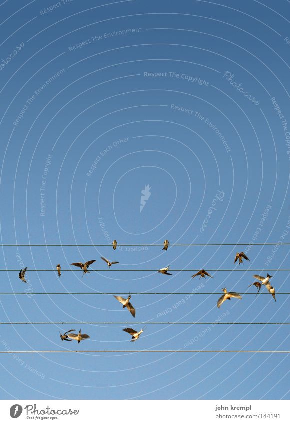 oder nicht vögeln Himmel blau Sommer Linie Vogel fliegen Geometrie Draht Musiknoten singen Griechenland Lied Musiker Nest flattern Schwalben