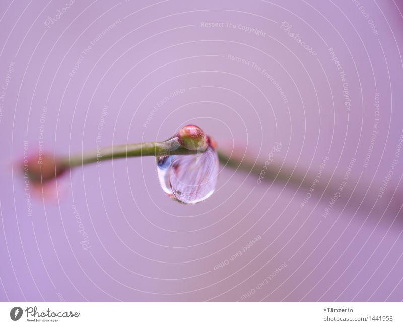 rosa Tropfen Natur Pflanze Urelemente Wassertropfen Herbst Winter Regen Sträucher ästhetisch nass natürlich schön weich achtsam ruhig Zufriedenheit Farbfoto