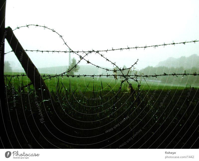 Stacheldraht Zaun nass Seil Nebel Pfosten