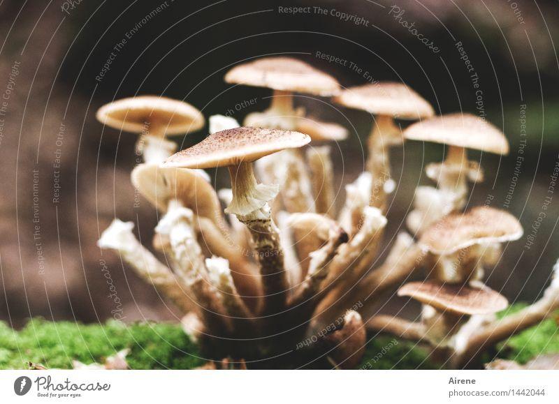 alle unter einem Hut Natur Herbst Pilz Wald kuschlig natürlich Sauberkeit dünn braun grün weiß Schutz Geborgenheit Sympathie Zusammensein Wachstum Zusammenhalt