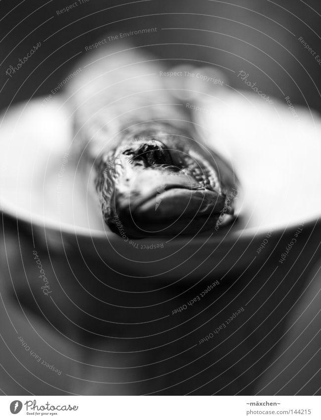 toter Fisch Hand weiß schwarz Auge dunkel Ernährung Tod Traurigkeit Armut liegen Fisch Trauer Informationstechnologie lecker Teller E-Mail