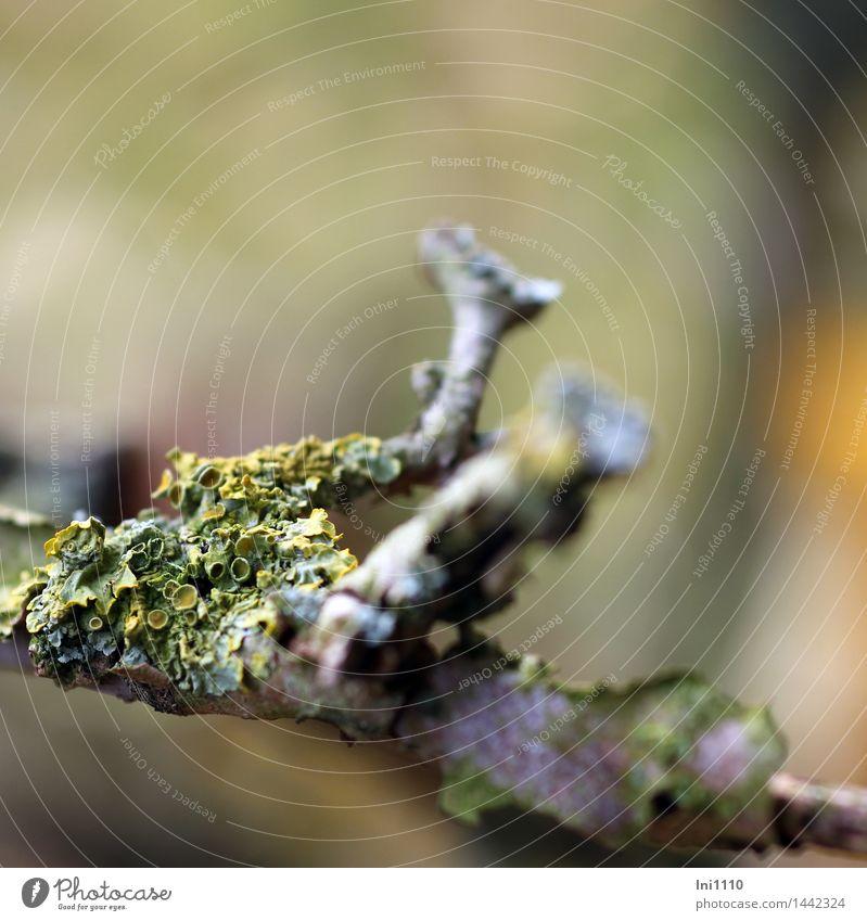 Helgiland II | Flechten Natur Pflanze grün schön weiß Baum Landschaft Wald schwarz Umwelt gelb Herbst Wiese natürlich grau Garten