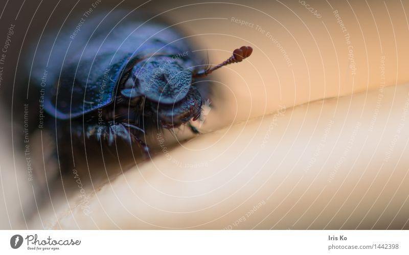 in der Ruhe liegt die Kraft Umwelt Natur Tier Herbst Wald Wildtier Käfer Waldmistkäfer 1 krabbeln natürlich schwarz friedlich achtsam geduldig ruhig