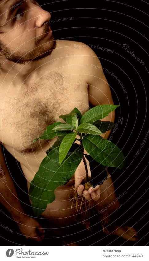 Lo Mann Mensch Akt Körper Gesicht Hand Pflanze Blatt Avocado Wurzel Baumwurzel Stengel Schatten grün zufällig ruhig Gelassenheit zeigen