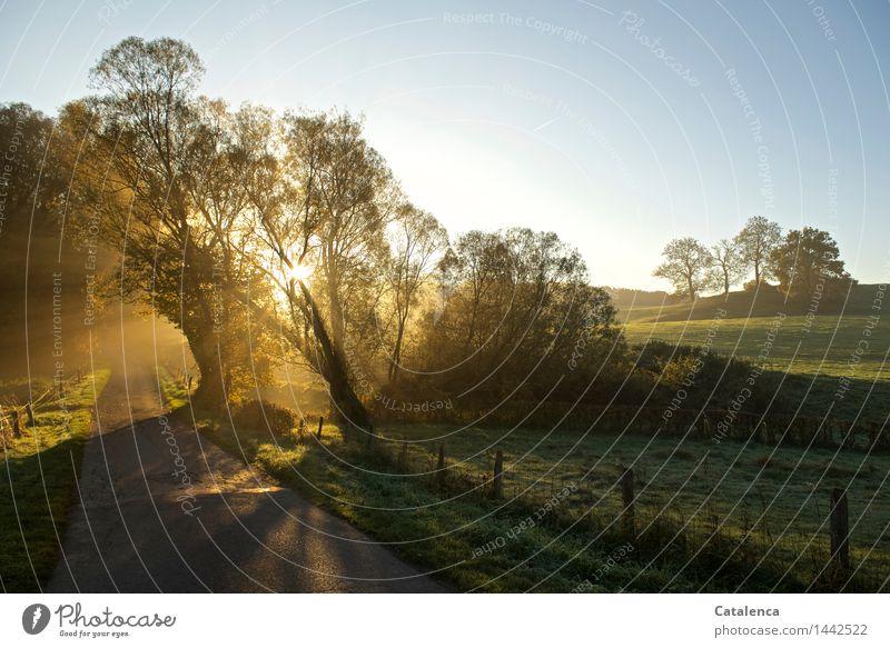 Morgenspaziergang Natur Landschaft Pflanze Luft Sonnenaufgang Sonnenuntergang Sonnenlicht Herbst Schönes Wetter Wiese Wege & Pfade glänzend blau gelb gold grau