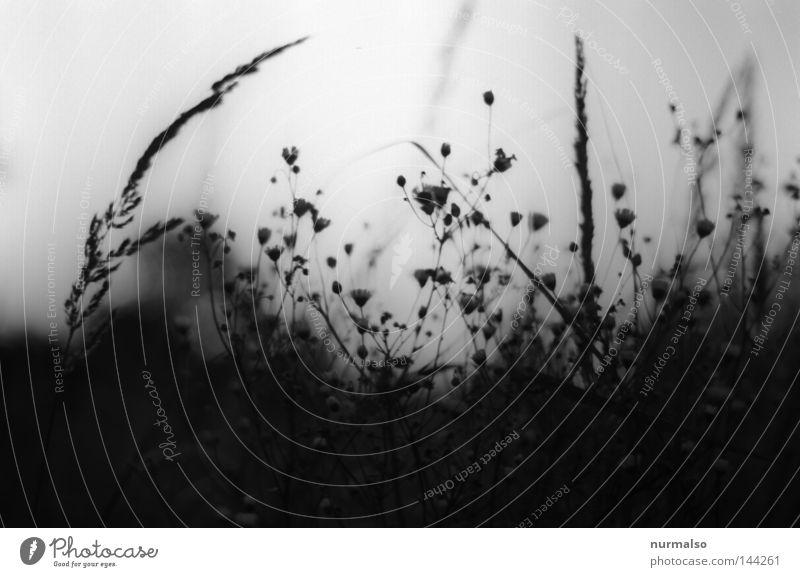 Traum in Grau Himmel Natur weiß schwarz Gefühle Gras Wege & Pfade grau Blüte träumen Stimmung Feld liegen geschlossen Urwald analog