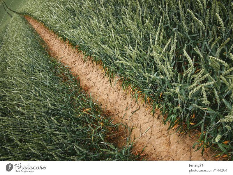Noch nen Korn? Sommer Ernährung Lebensmittel Wege & Pfade Feld Erde gehen laufen Getreide lang Landwirtschaft Fußweg Kornfeld Ackerbau Grundbesitz verloren