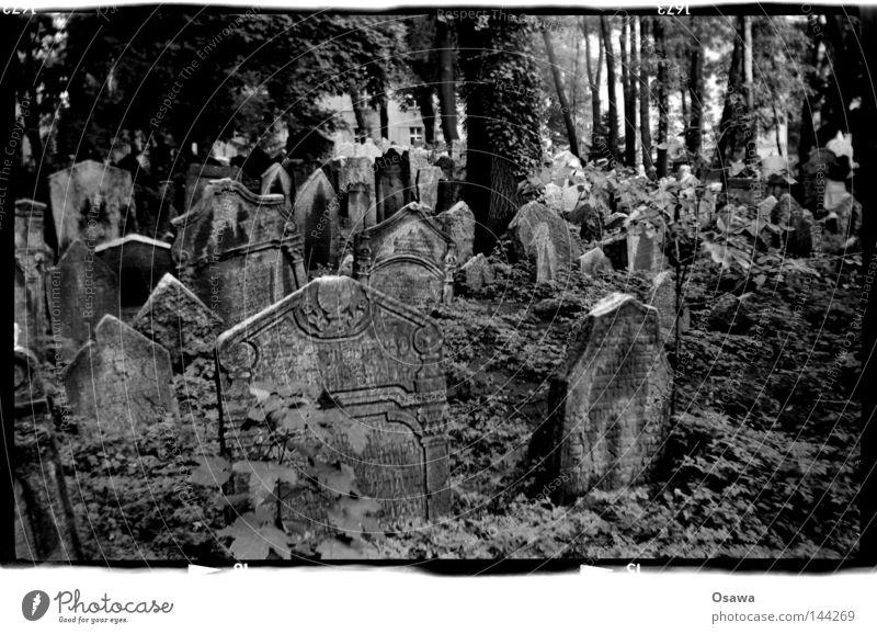 Prag, jüdischer Friedhof Baum Tod Trauer Verzweiflung Friedhof Tschechien Grab Prag Mittelformat Grabstein Jüdischer Friedhof