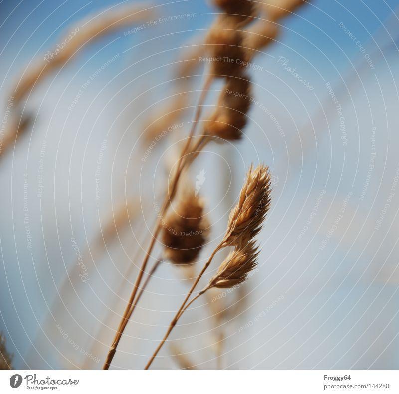 Im Wind Himmel Sommer Wolken Erholung Wiese Blüte Gras Berge u. Gebirge wandern laufen Pause Sturm Stengel Samen Beeren