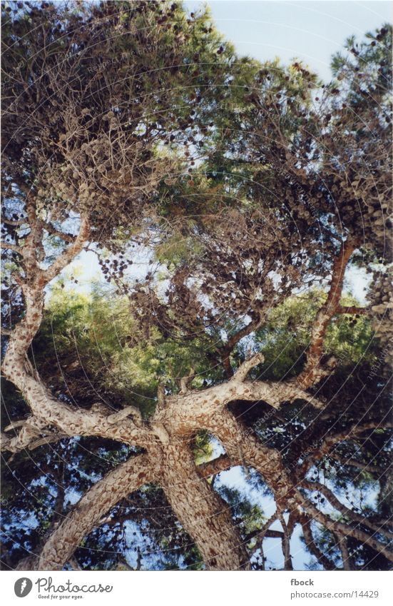 Baum Strand Sonne Urlaum