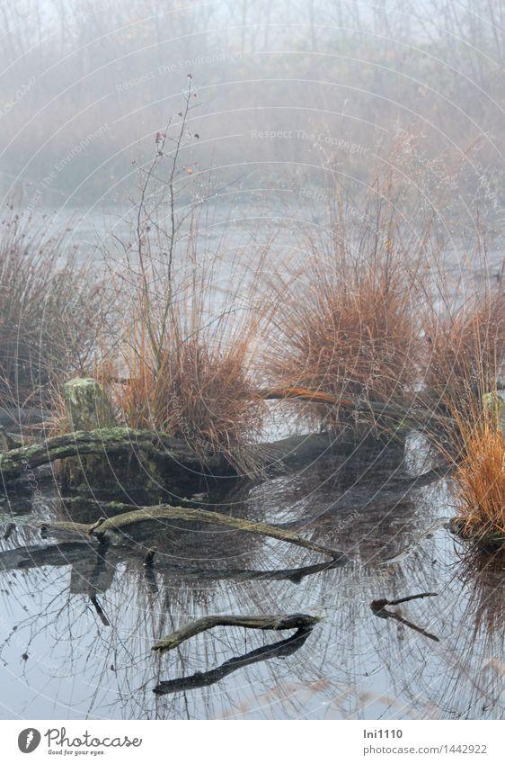 Nebel im Moor Umwelt Natur Landschaft Pflanze Urelemente Wasser Wassertropfen Herbst Wetter Gras Moorhexe im Nebel Teich außergewöhnlich fantastisch nass