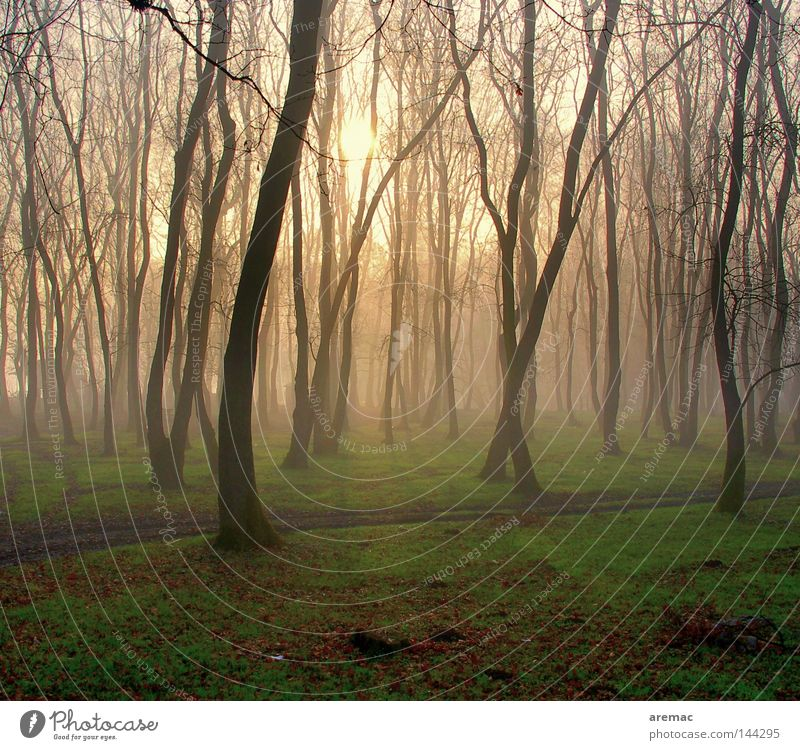 Morgentanz Wald Baum Gras Nebel Sonnenaufgang Licht Auwald Stimmung Frühling Landschaft Natur