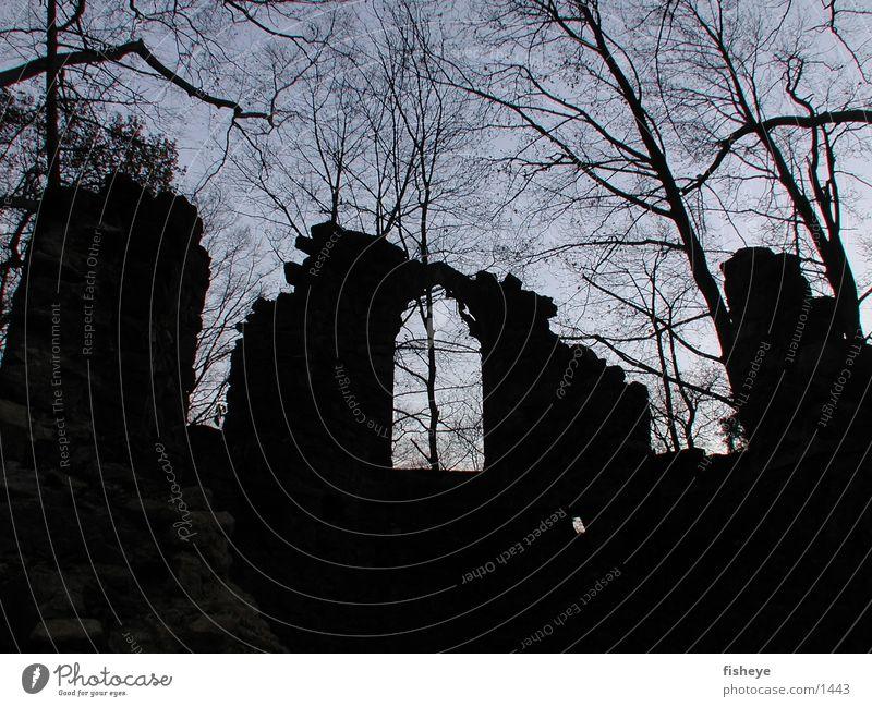 Ruinen Baum historisch Ruine Fensterbogen