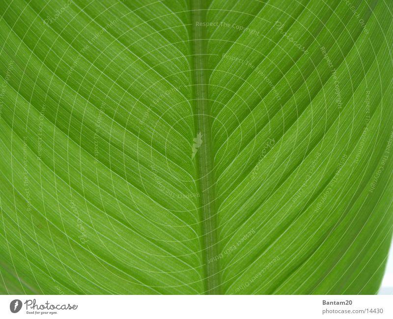 Die Bananenpflanze Blume Pflanze Blatt