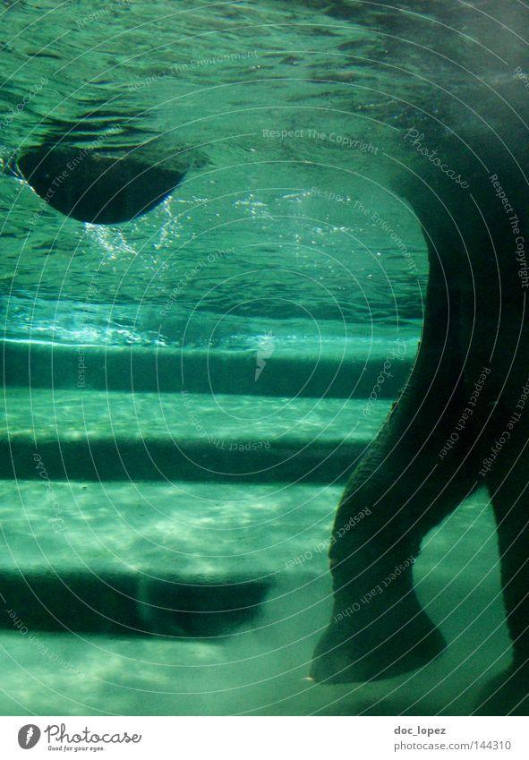Badetag grün Tier Treppe Schwimmen & Baden Zoo Säugetier Erfrischung Staub Elefant Safari Koloss Rüssel Unterwasseraufnahme Wassertier