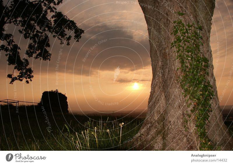 Sonnenuntergang neben Baum Sommer Wolken Berge u. Gebirge Felsen Efeu