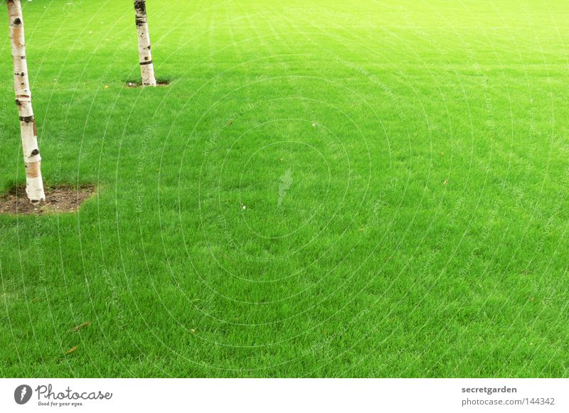 englischer rasen England grün Birke Baum Raum weiß Quadrat erobern Ordnung Verbote Spielen kinderlos Park Großbritannien offen Sommer Frühling Anhäufung