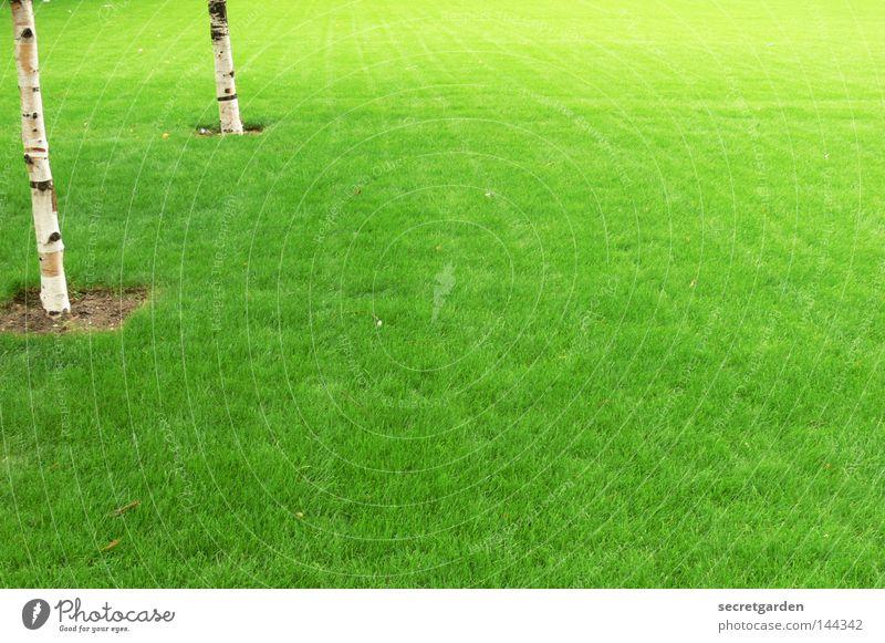 englischer rasen Natur weiß grün Baum Sommer Spielen Frühling Haare & Frisuren Garten hell Linie Park Raum offen Klima Ordnung