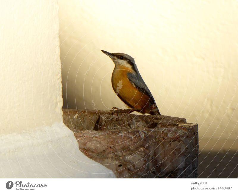 geweihte Vogeltränke... Kirche Mauer Wand Tier Kleiber 1 leuchten sitzen trinken ästhetisch schön Einsamkeit Zufriedenheit Mut Weihwasserkessel weihwasser