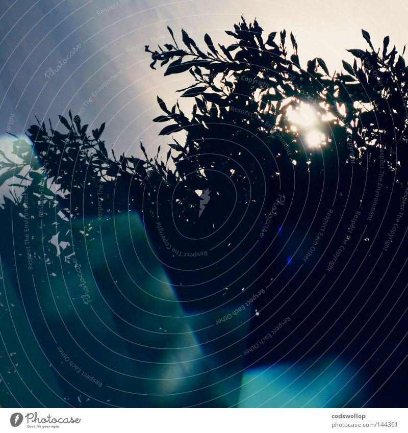 blaupause Sonne kobaltblau Prissian Licht Reflexion & Spiegelung Denken Himmel Wolken Baum Schwimmbad Detailaufnahme obskur sun cobalt preußischblau bleu light