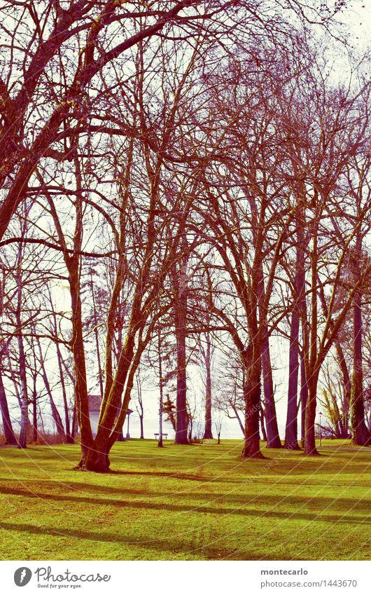 durchatmen Himmel Natur Pflanze grün Baum kalt Umwelt Herbst Wiese Gras natürlich braun Park wild Erde authentisch