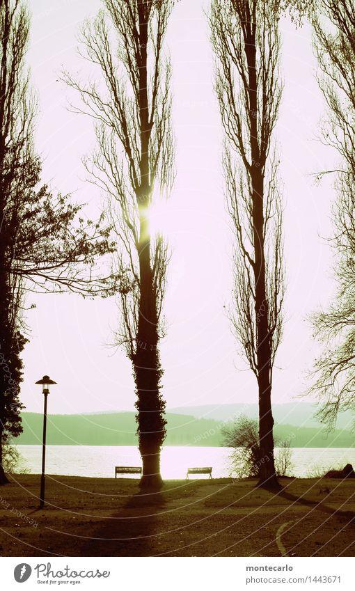 ruhe vor dem sturm Umwelt Natur Landschaft Pflanze Urelemente Erde Himmel Wolkenloser Himmel Horizont Herbst Schönes Wetter Baum Blatt Wildpflanze Seeufer