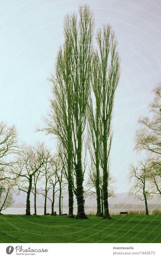 wintergrün Umwelt Natur Landschaft Urelemente Erde Luft Himmel Wolkenloser Himmel Herbst Winter Pflanze Baum Gras Grünpflanze Wildpflanze Park Wiese Seeufer