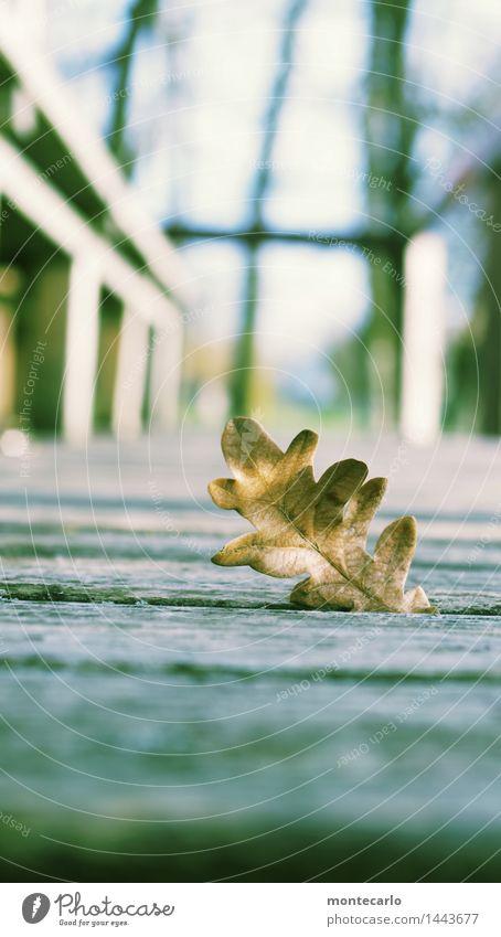 vergessen Umwelt Natur Luft Herbst Schönes Wetter Pflanze Blatt Grünpflanze Wildpflanze Veranda Holz alt dünn authentisch kalt natürlich trocken wild weich