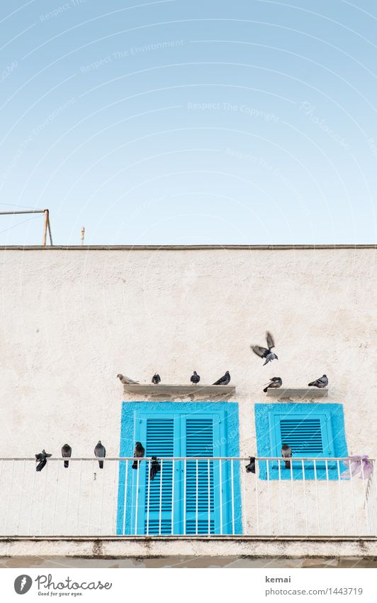 Versammlung Stadt blau Sommer weiß Erholung ruhig Haus Tier Fenster Wand Mauer fliegen oben Fassade hell Tür