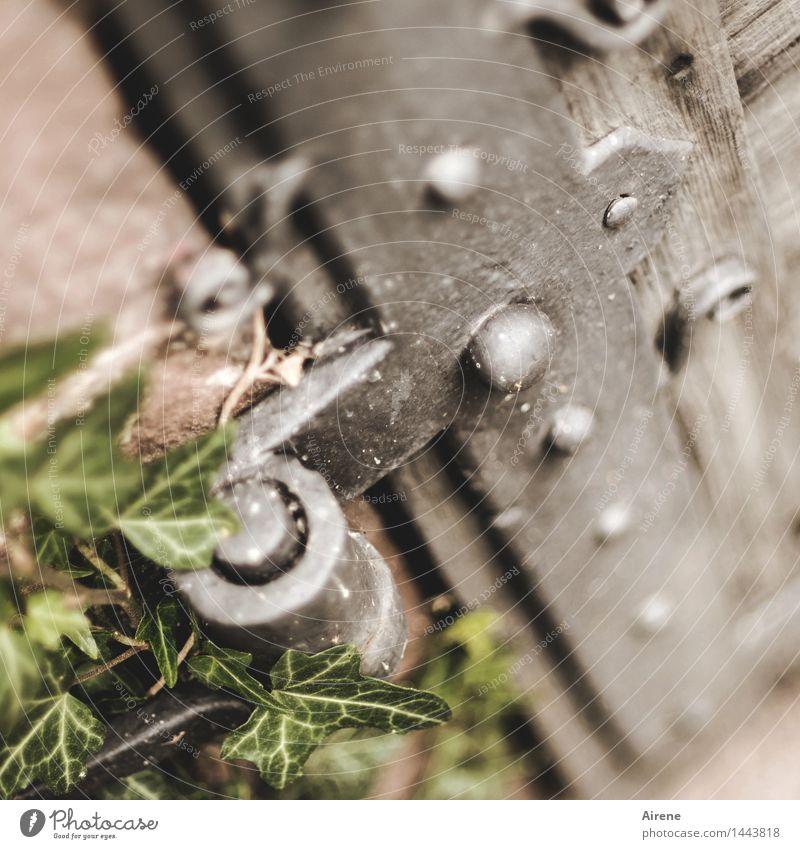 der Dreh- und Angelpunkt alt Pflanze grün Blatt dunkel grau Metall Wachstum Tür Kirche Vergangenheit Burg oder Schloss Sehenswürdigkeit Eisen Griff Grünpflanze