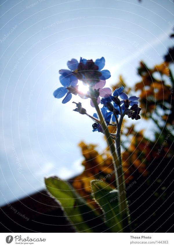 blue flower Blume Sonne Natur grün blau schön Leben Luft Image Gras Götter Himmel Licht hell Lampe Beleuchtung Frühling Bild Gott