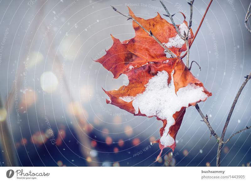 Ablösung Winter Natur Wetter Blatt kalt braun gelb grau Ast Jahreszeiten Orange Schnee Schneeflocke flares Außenaufnahme Menschenleer Textfreiraum links Tag