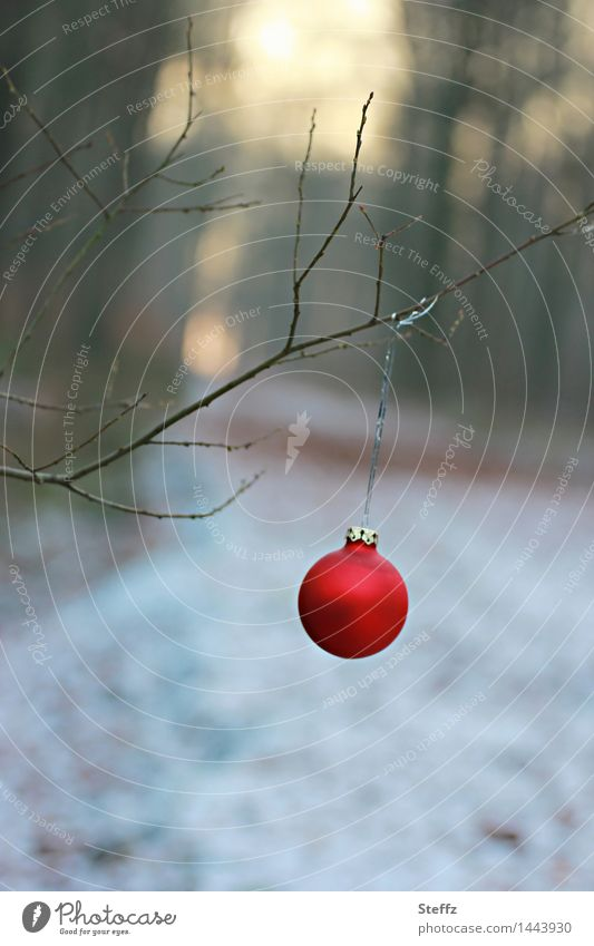 bald Weihnachten.. Natur Weihnachten & Advent rot Landschaft Winter Wald Schnee Denken Stimmung Zweig Weihnachtsbaum Vorfreude Christbaumkugel Weihnachtsdekoration Dezember Zweige u. Äste