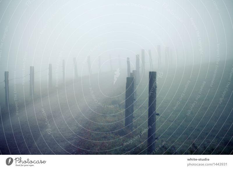 Düsterland Natur gehen Straße Nebel Nebelschleier Nebelbank Nebelstimmung Nebeldecke Wege & Pfade ungewiss Ungewisse Zukunft unsichtbar verschwunden Mysterium