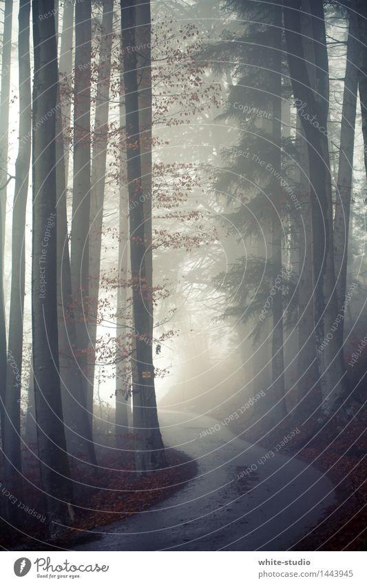 Into the Light Himmel (Jenseits) Wald dunkel Straße Nebel Risiko Nebelschleier Nebelstimmung