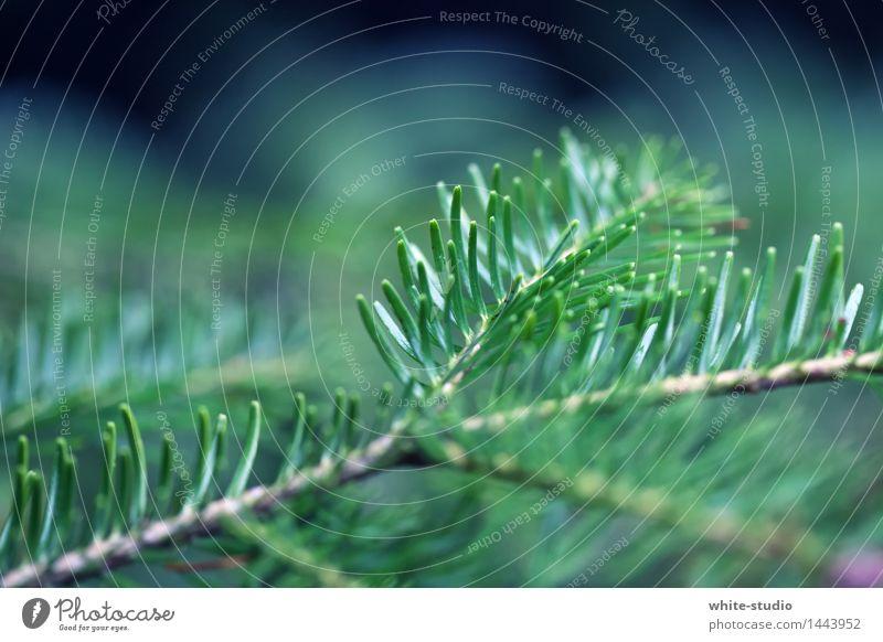 Weihnachtszweig Tannenzweig grün Weihnachten & Advent Tiefenschärfe Anti-Weihnachten Zweige u. Äste Nadelbaum Tannennadel Fichte Farbfoto