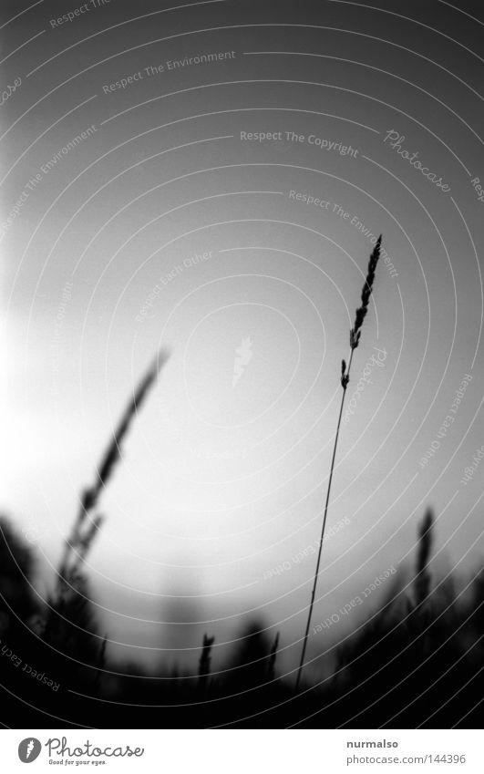Traum in Grau II Himmel Natur weiß schwarz Gefühle Gras Wege & Pfade grau Blüte träumen Stimmung Feld liegen geschlossen Bett Urwald