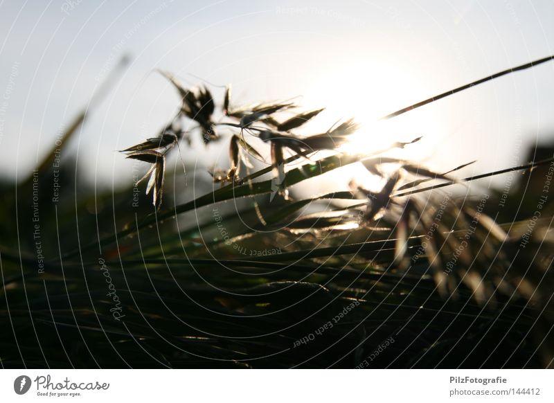 Stroh 80 Heu Ernte Himmel Sonne Sonnenuntergang Wiese Gras Stengel Sommer Schatten Futter Tier Bauernhof Kuh Schaf mähen Anhänger blau schwarz Landwirtschaft