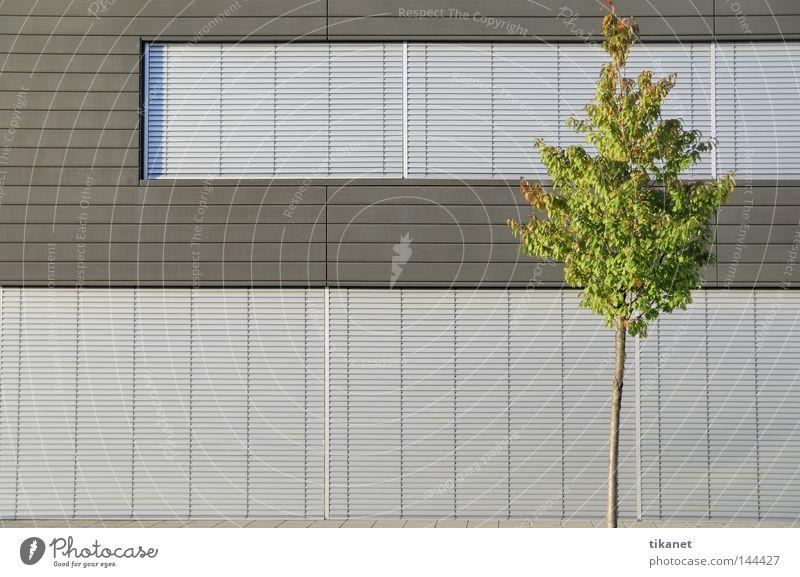 Natur? unpersönlich modern Monochrom Gegenteil Aluminium kalt Glätte Baum grün Blatt Jalousie Strukturen & Formen grau silber Fassade Gebäude Konzentration