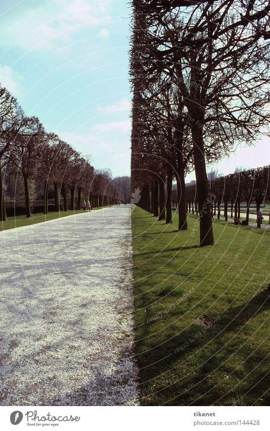perfekt gerade ;-))) Park Baum Wege & Pfade Rasen gepflegt geschnitten gestellt Linie Teilung geteilt Sträucher Fluchtpunkt Weitwinkel unnatürlich Natur