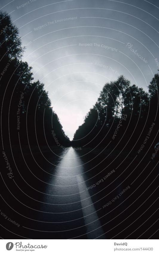 straight Himmel Baum Straße Wald dunkel Wege & Pfade Straßenverkehr nass Verkehr KFZ Asphalt Verbindung feucht Abenddämmerung Allee Straßenbelag