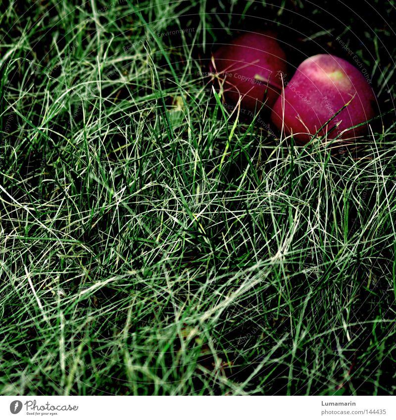 Techtelmechtel Herbst Wiese Gras Zusammensein Frucht liegen paarweise Vergänglichkeit Apfel geheimnisvoll einzeln reif verstecken Versuch Versteck Umwelt