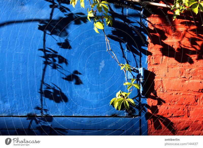 Hinterhof in Kreuzberg Sonne blau Pflanze Sommer Mauer Tür geschlossen Tor Eisen Sonntag Ranke Grünpflanze Kletterpflanzen