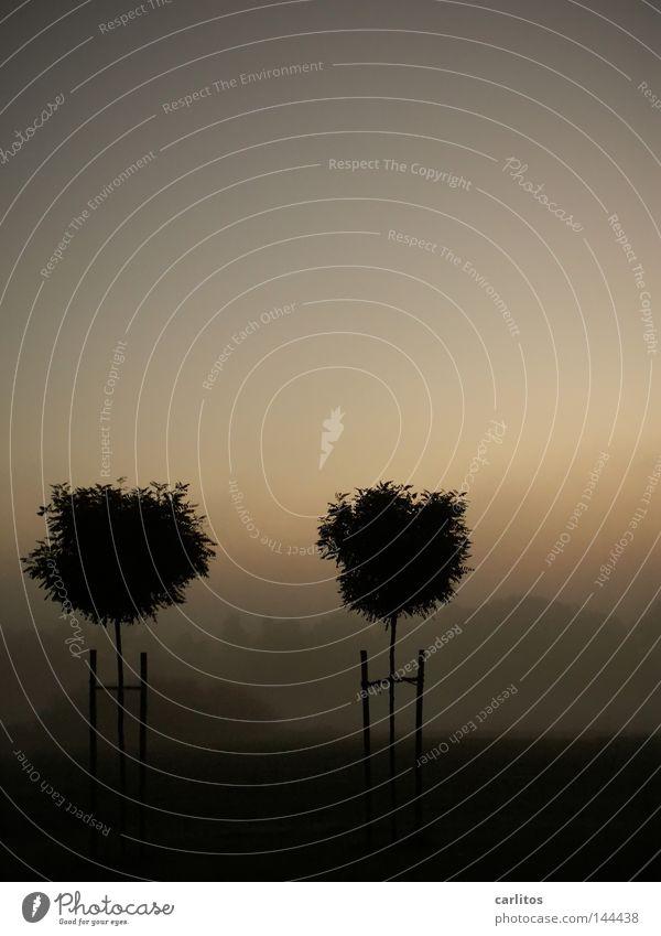 Morgenstille 2 Baum ruhig gelb Erholung Herbst träumen Zusammensein Nebel paarweise Vergänglichkeit Sehnsucht faulenzen Morgennebel Weißabgleich