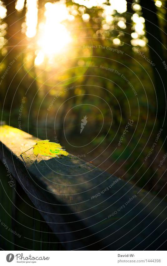 neulich im Wald Umwelt Natur Landschaft Sonne Sonnenaufgang Sonnenuntergang Sonnenlicht Herbst Klima Klimawandel Wetter Schönes Wetter Pflanze Baum Blatt