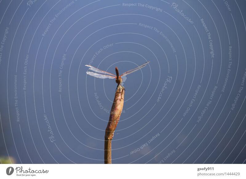 Gelandet Umwelt Natur Landschaft Wasser Pflanze Gras Grünpflanze Garten Park Teich See Tier Wildtier Flügel Libelle Libellenflügel 1 beobachten stehen