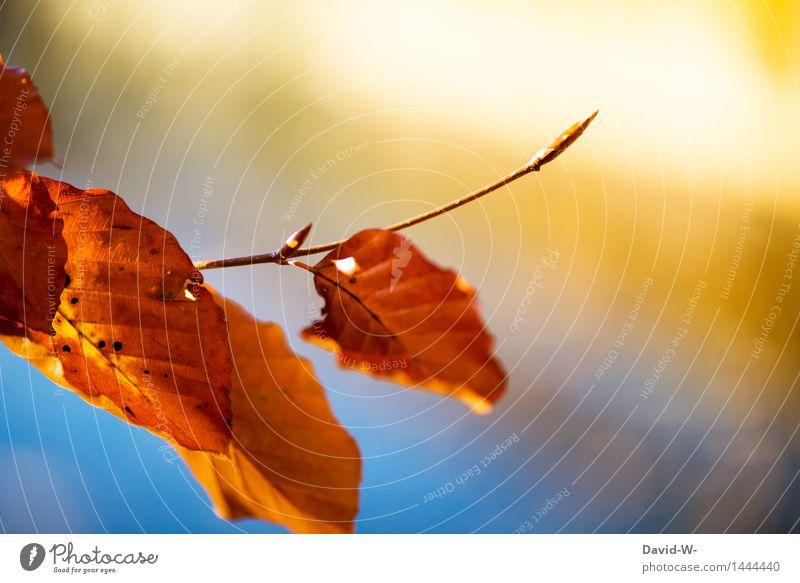 Herbstknospe Himmel Natur Pflanze blau schön Sonne Landschaft Blatt Winter Wald Umwelt Leben Blüte Herbst orange Park
