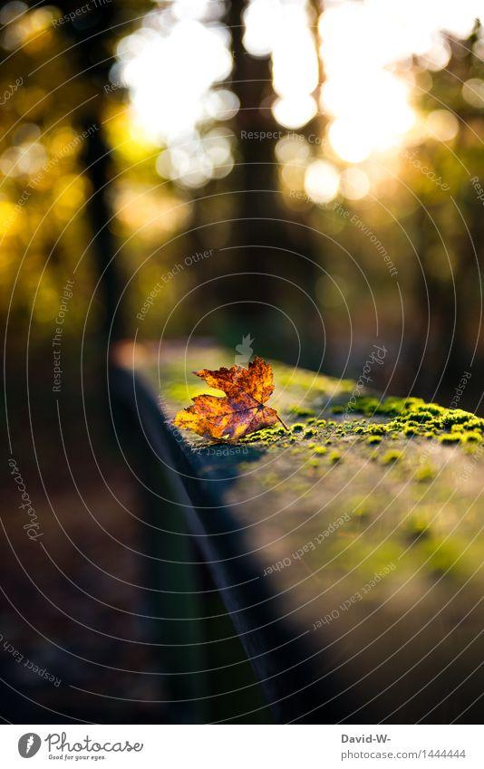 Der Herbst steht vor der Tür Umwelt Natur Landschaft Himmel Sonne Sonnenaufgang Sonnenuntergang Sonnenlicht Schönes Wetter Dürre Blatt Park Wald leuchten schön