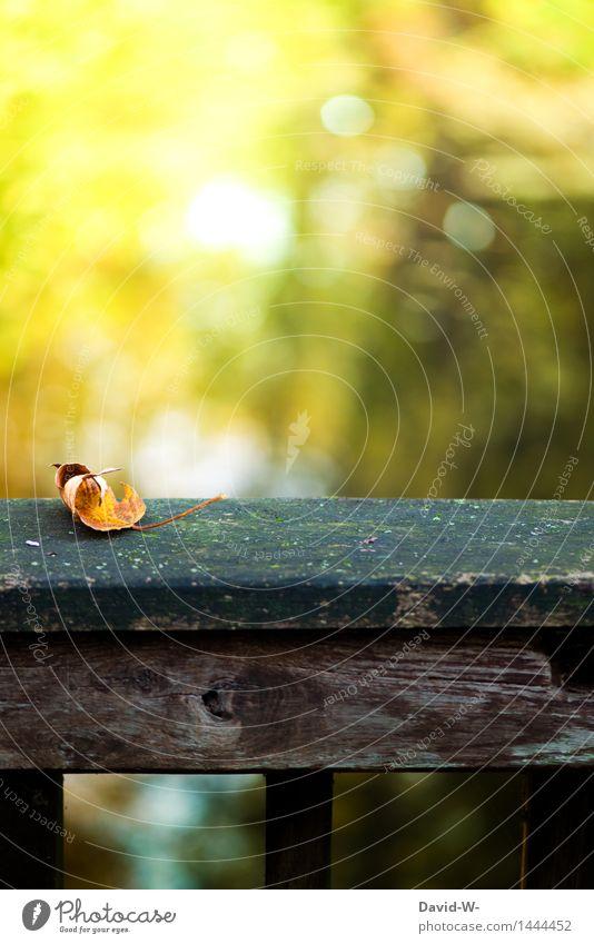 Herbstzeichen Umwelt Natur Landschaft Luft Klima Klimawandel Wetter Schönes Wetter schlechtes Wetter Wind Wald fallen verdorrt gefallen Brückengeländer Moos